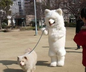 Let dogs run freely when you walk them? No!That will kill them!