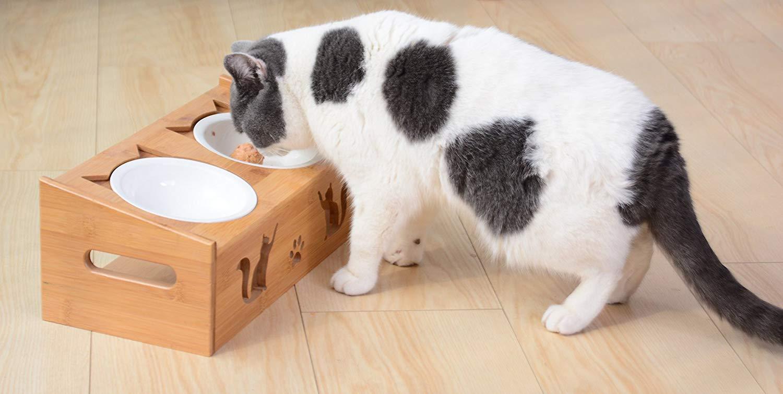 Elevated Ceramic Cat Bowl On Amazon Stores Lepetco Com