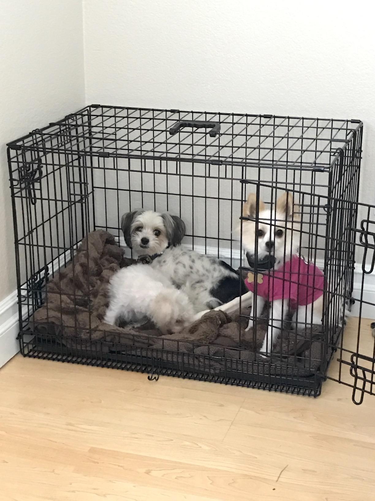 Heavy Duty Folding Pet Crate