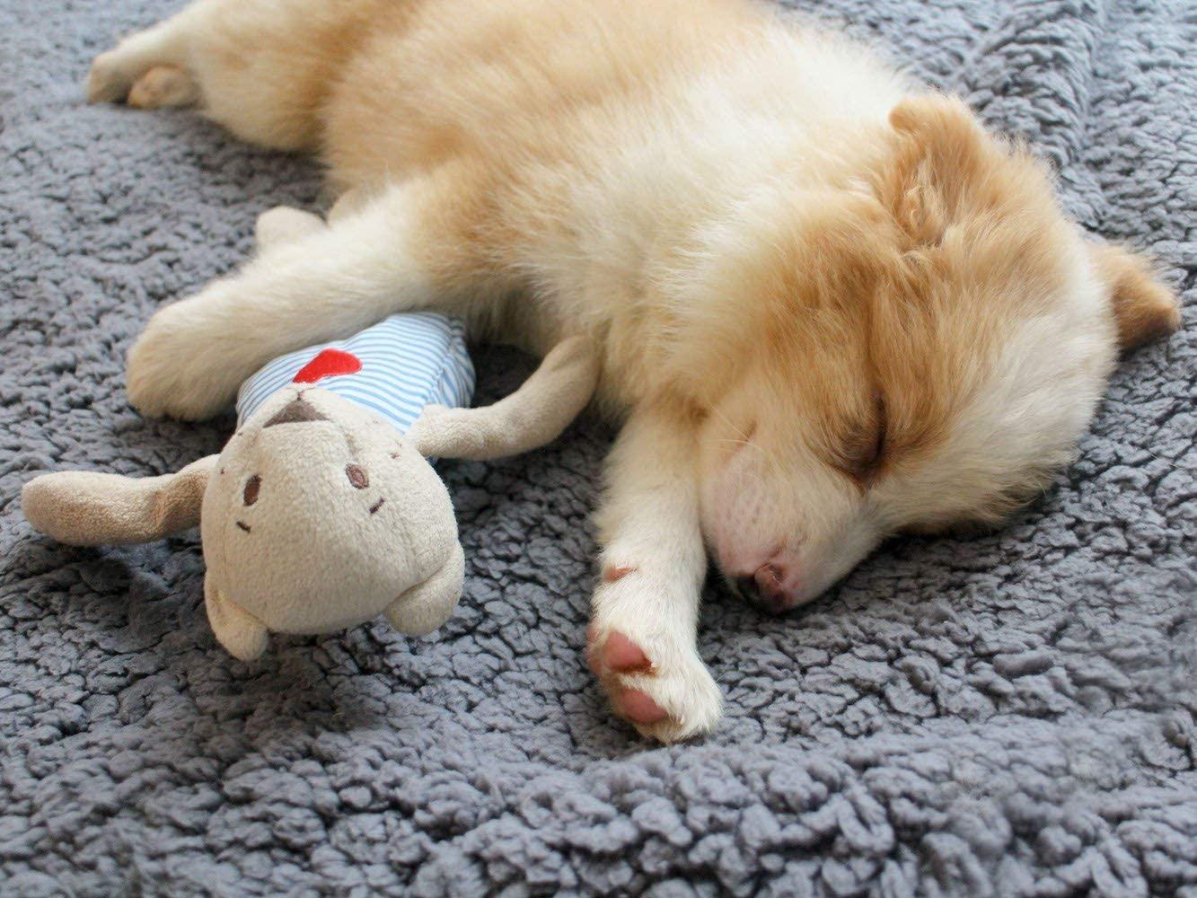 Soft Dog Blanket Manufacturer