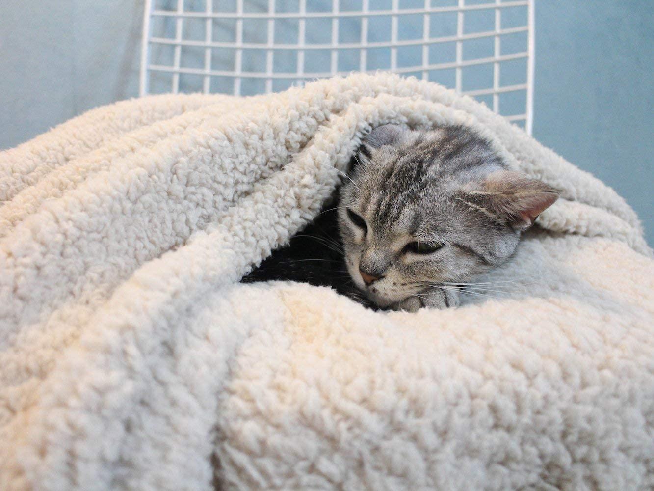 Soft Warm Pet Blanket Factory
