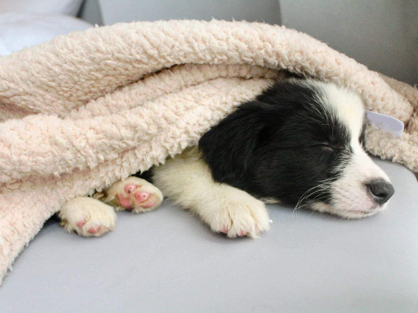 Fleece Dog Blanket Manufacturer