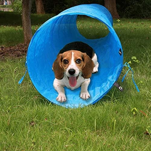 Collapsible Outdoor Dog Tunnel Wholesale supply